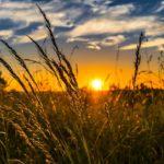 Stymulatory wzrostu upraw w branży rolniczej